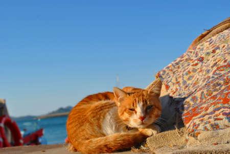 catnap: Cat in Sunshine Stock Photo