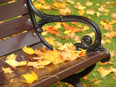 Yellow leaves lie on a bench in park in the autumn Stock Photo - 3654458