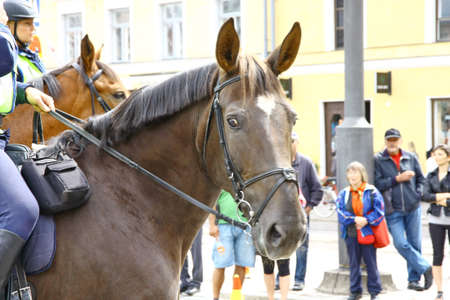 HELSINKI, FINLAND - JUNE 30: Mounted police protect people taking part in the annual Helsinki Pride gay parade in Helsinki, Finland on June 30, 2012.  Stock Photo - 17436278