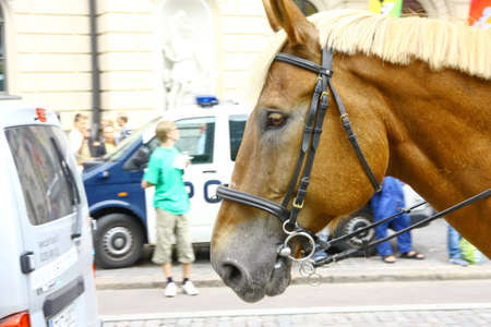 HELSINKI, FINLAND - JUNE 30: Mounted police protect people taking part in the annual Helsinki Pride gay parade in Helsinki, Finland on June 30, 2012.  Stock Photo - 17436290