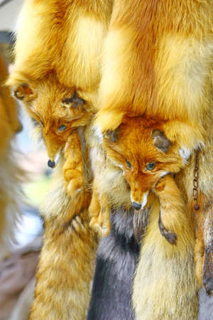 The fur of a fox which is on sale