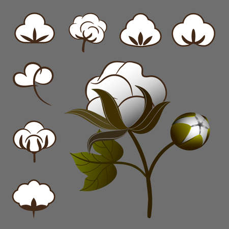 oil crops: a set of cotton to create labels and trade marks Illustration