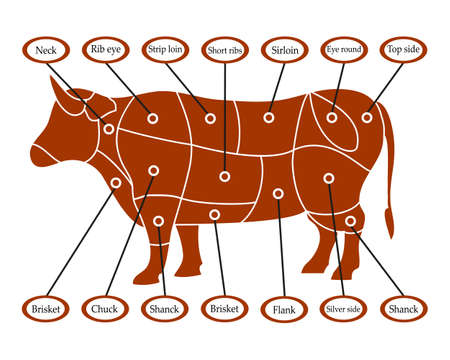Scheme to cut cow beef meat, vector illustration.
