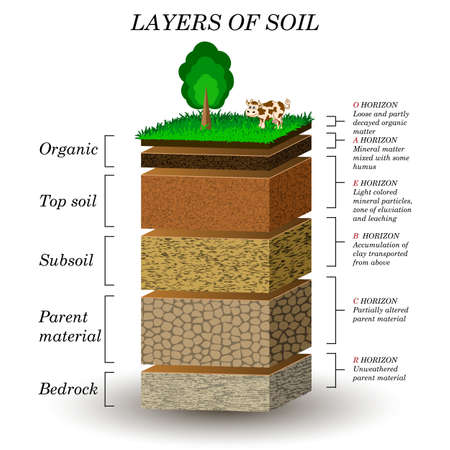 Layers of soil, education diagram. Mineral particles, sand, humus and stones, natural fertilizer. Template for banners, page, posters, vector illustration. Çizim