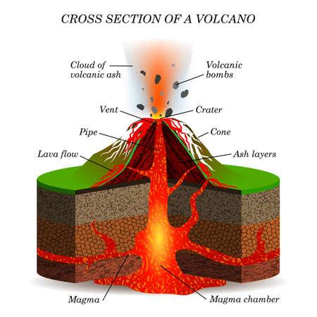 Vulkanausbruch im Querschnitt. Wissenschaftlicher Entwurf der Bildung für Poster, Plakate, Seiten, Fahnen, Vektorillustration.