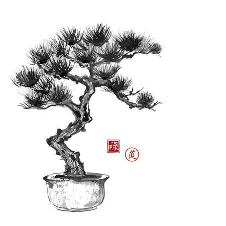 arbol de pino: Bonsai lado del árbol de pino dibujados a mano con tinta en el tradicional estilo japonés sumi-e. Contiene jeroglíficos - la felicidad, suerte