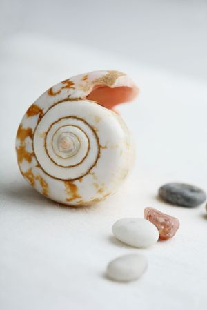 cone shaped: A close-up of an arrangement of a cone shaped seashell and pebbles on a light background.