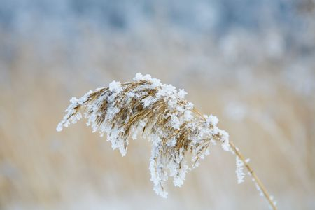 very cold: Frozen hay on very cold winter day