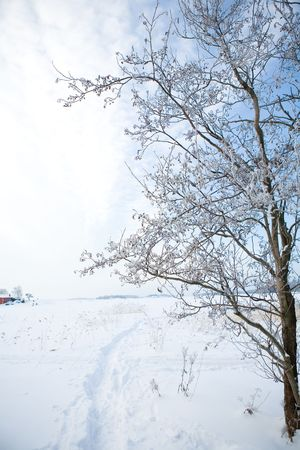 Beautiful winter scene with snowy trees, on a very cold winter day photo