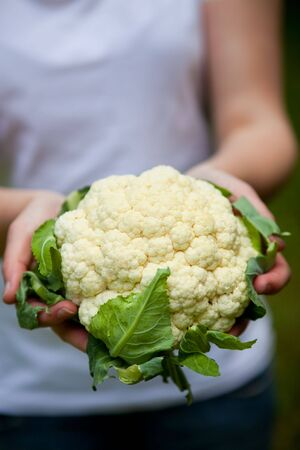 Woman holding a beautiful fresh raw cauliflower