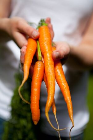 A bunch of beautiful fresh carrots, held by a woman