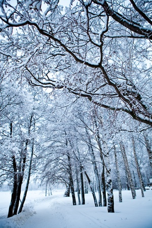 winter finland: Winter trees on very cold winter day in Finland Stock Photo