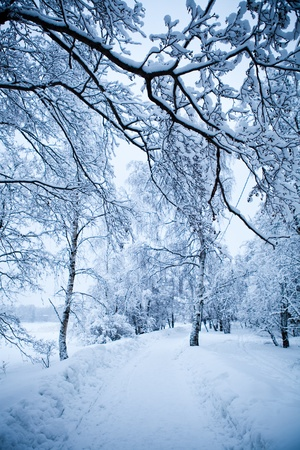 Winter trees on very cold winter day in Finland Stock Photo