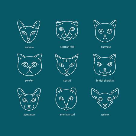 Kattenrassen icon set inclusief Schotse vouw, siamese, Somalische, Britse korthaar, sphynx, Birmese, abessijn, Perzische, Amerikaanse krul. Leuke huisdieren collectie.