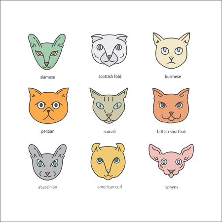 Cat breeds icon set including scottish fold, siamese, somali, british shorthair, sphynx,  burmese, abyssinian, persian, american curl. Cute pets collection. Illustration