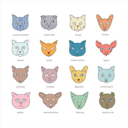 Cat breeds icon set including american shorthair, scottish fold, bengal, siamese, birman, somali, british shorthair, sphynx, tonkinese, burmese, abyssinian, turkish angora, persian, oriental shorthair, nebelung, american curl. Cute pets collection. Illustration