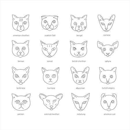 고양이 품종 아이콘 집합을 미국의 shorthair, 스코틀랜드 배, 벵골, 샴, birman, somali, 영국 쇼트 헤어, 스핑크스, tonkinese, 버마어, abyssinian, 터키 앙고라, 페
