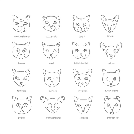 Cat breeds icon set including american shorthair, scottish fold, bengal, siamese, birman, somali, british shorthair, sphynx, tonkinese, burmese, abyssinian, turkish angora, persian, oriental shorthair, nebelung, american curl. Cute pets collection. Ilustração