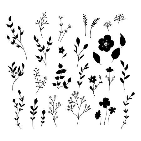 White and black isolated floral elements. Hand drawn flowers.