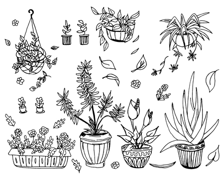 indoor bud: Pot plants set, vector illustration, hand-drawn design elements.