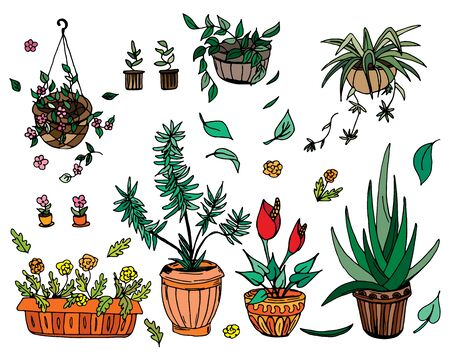 Pot plants set, vector illustration, hand-drawn design elements.