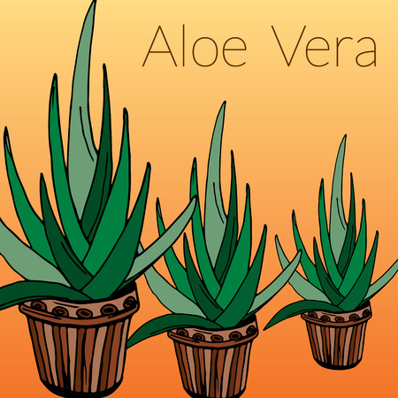 indoor bud: Aloe vector background, hand drawn  vector illustration