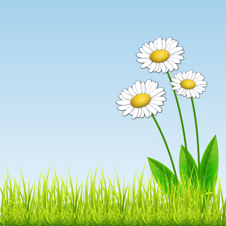 mead: White camomiles. Floral background. White flowers on blue background. With space for text.  Vector Illustration Illustration