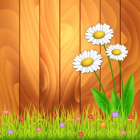 camomiles: White camomiles. Floral background. White flowers on wood background. With space for text. Vector Illustration