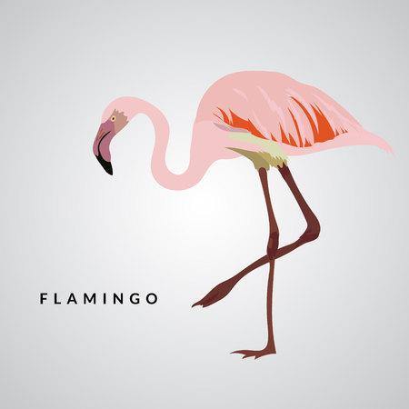 subtropics: Pink flamingo. Exotic bird. Design element. Flamingo vector illustration Illustration