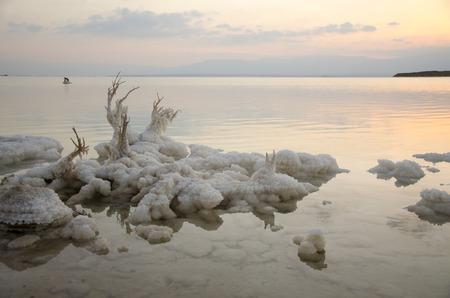 Totes Meer Morgendämmerung, Salz Felsen und Baum am Toten Meer Standard-Bild
