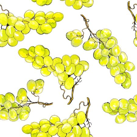 grape vines: Grapes watercolor style seamless pattern. Green vine on withe background. Vector illustration.
