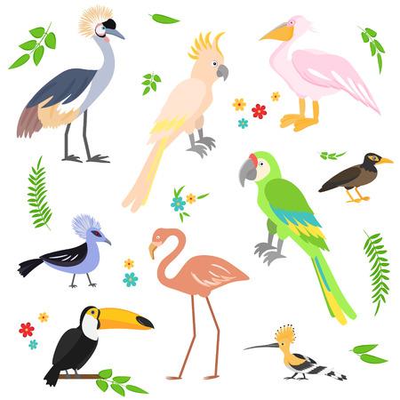 common myna bird: Colorful icons birds. Tropical birds collection. Vector set. Flamingo, toucan, pelican, parrot, hoopoe