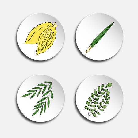 Cuatro especies de Sukkot judío de vacaciones: la rama de palma, sauce y hojas de mirto, etrog amarillo. Iconos conjunto. Ilustración del vector.