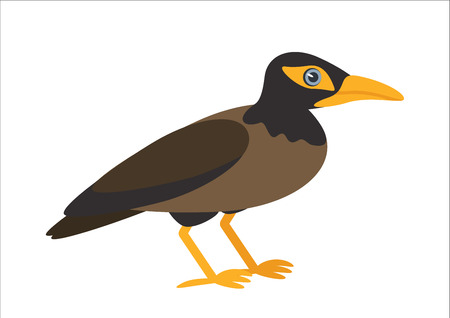 starling: ommon myna isolated on white background. Exotic bird. illustration Illustration