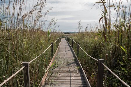 wooden bridge and strings through a cane field until it was lost on the horizon. Фото со стока