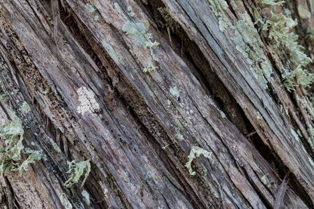 diagonal texture of wood with musk and lichen Фото со стока