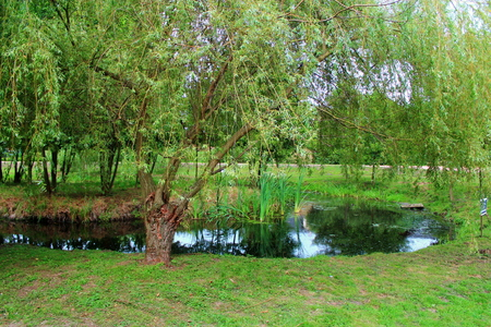 natural vegetation: View pond surrounded by natural vegetation in summer, warm day. Stock Photo