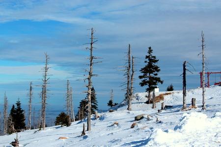 kwaśne deszcze: Przełęcz Karkonoska śnieżna widziane z Revival hostelu do granicy polsko-czeskiej. Uszkodzone drzewa są wynikiem kwaśnych deszczów zanieczyszczonej. Zdjęcie Seryjne
