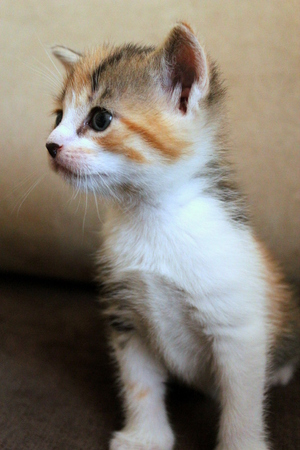 proudly: Small kitten sits proudly on the couch.