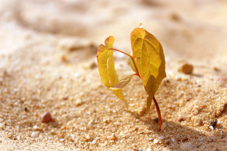Little plant growing on the sand under the hot sun.