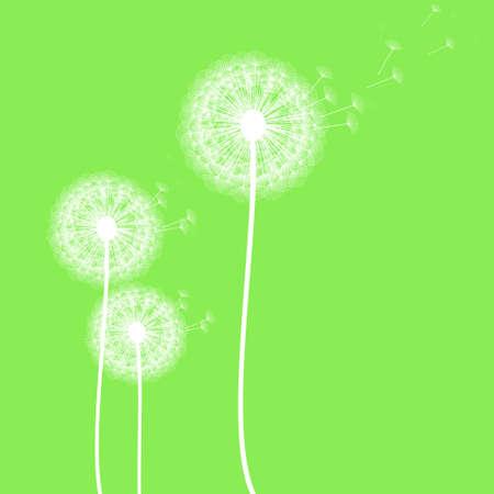 dandelion on green background,vector illustration