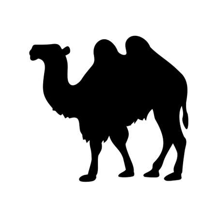 hump: camel icon on white background,vector illustration Illustration