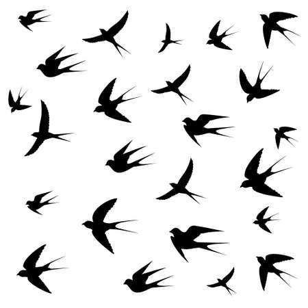 swallows: swallows image on white background,vector illustration Illustration