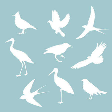 birds on blue background,vector illustration