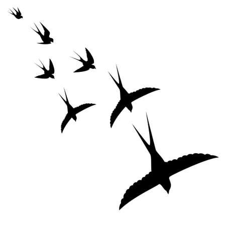 oiseaux sur fond blanc voler, illustration vectorielle