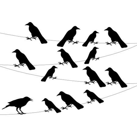 flock: a flock of crows on a wire