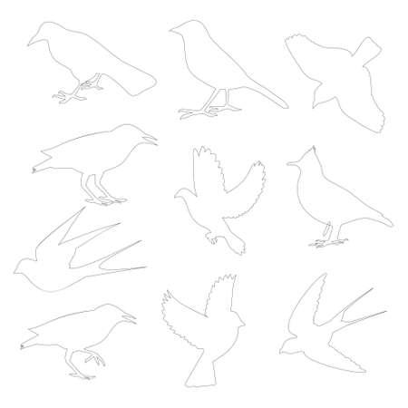 starling: birds contour on white background,illustration Illustration