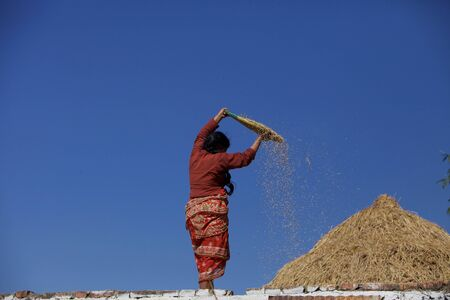 winnowing: woman on the roof wind winnowing the rice