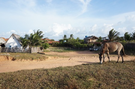house donkey: suburb view