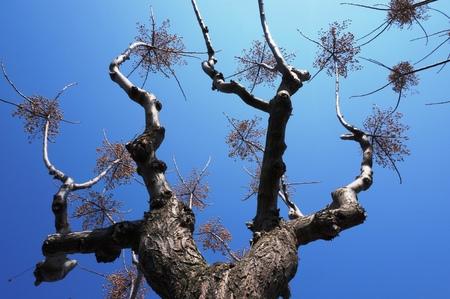 The cheerleading tree